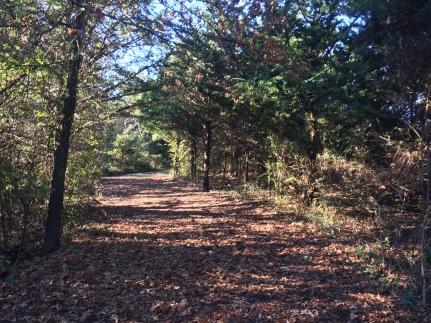 trail-pic